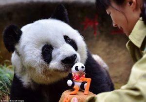 10 Of The Most Famous Giant Pandas Worldwide We Love Pandas Blog