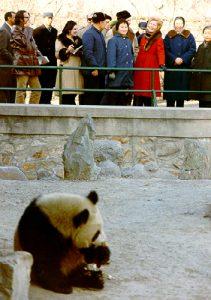First Lady Pat Nixon At The Panda Display, Beijing Zoo: Panda Diplomacy