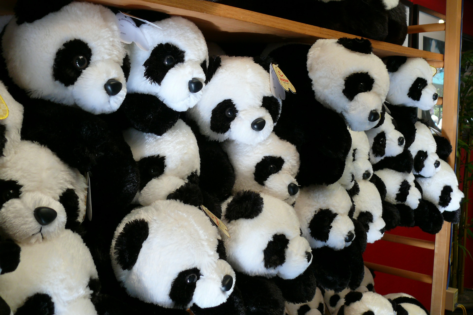 Stuffed Giant Pandas At The San Diego Zoo.